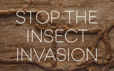 What to Do When Termites Infest Your Home
